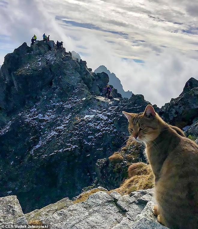 Chuyện thật như đùa: Dân leo núi phát hiện ra một chú mèo nhà ngồi ngẫm sự đời trên đỉnh núi cao nhất Ba Lan 3