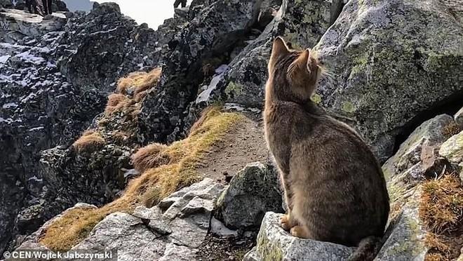 Chuyện thật như đùa: Dân leo núi phát hiện ra một chú mèo nhà ngồi ngẫm sự đời trên đỉnh núi cao nhất Ba Lan 4