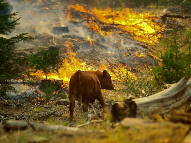 Là thảm họa với con người, nhưng thế giới tự nhiên lại rất thích cháy rừng - ảnh 1
