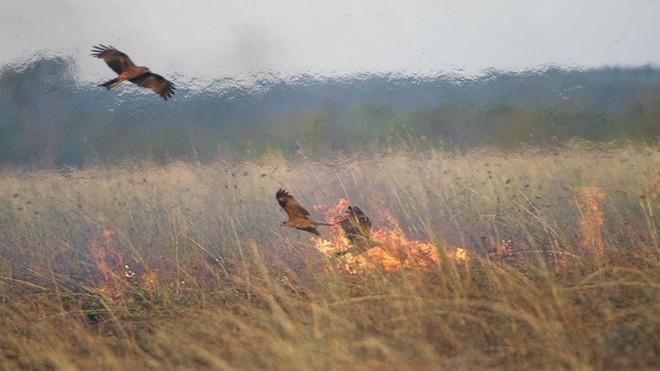 Là thảm họa với con người, nhưng thế giới tự nhiên lại rất thích cháy rừng - ảnh 2