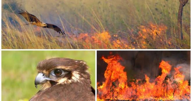 Là thảm họa với con người, nhưng thế giới tự nhiên lại rất thích cháy rừng - ảnh 3