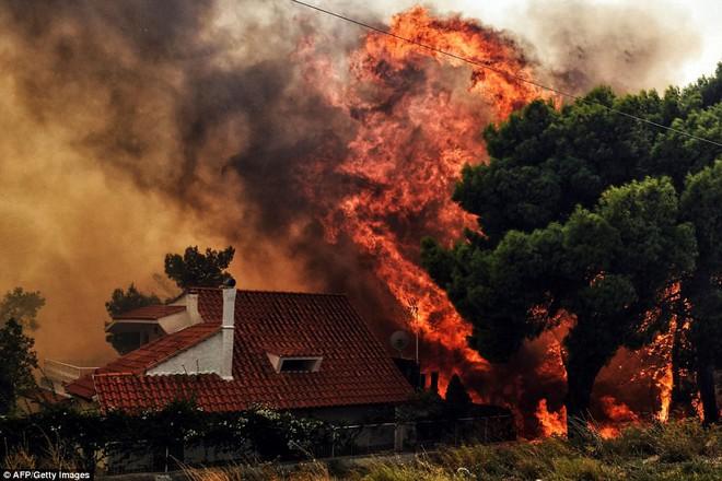 Là thảm họa với con người, nhưng thế giới tự nhiên lại rất thích cháy rừng - ảnh 12