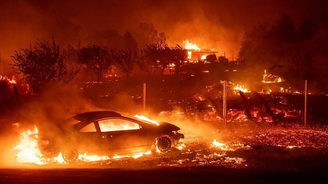 Là thảm họa với con người, nhưng thế giới tự nhiên lại rất thích cháy rừng - ảnh 10