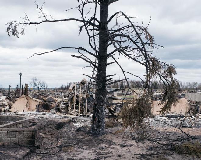 Là thảm họa với con người, nhưng thế giới tự nhiên lại rất thích cháy rừng - ảnh 4
