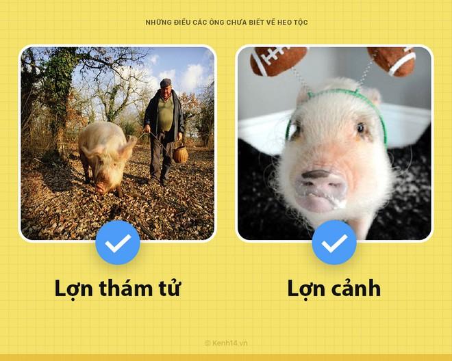 Xin chào! Tôi là một con lợn và các ông chưa biết tôi có thể hay ho đến thế nào đâu - Ảnh 4.