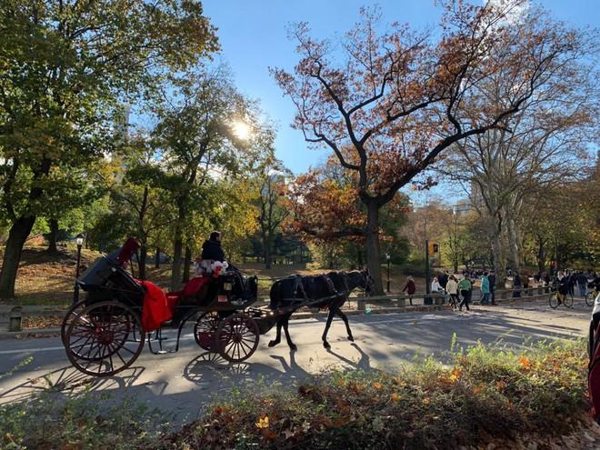 Khám phá khả năng chụp ảnh ấn tượng của iPhone XS Max vào một ngày thu ở Central Park - Ảnh 8.