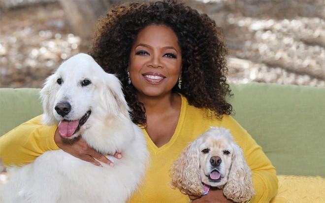 """Danh sách """"rich pet"""" giàu có nhất thế giới: Sở hữu tài sản hàng trăm triệu đô, ăn đứt cả sao Hollywood - ảnh 6"""