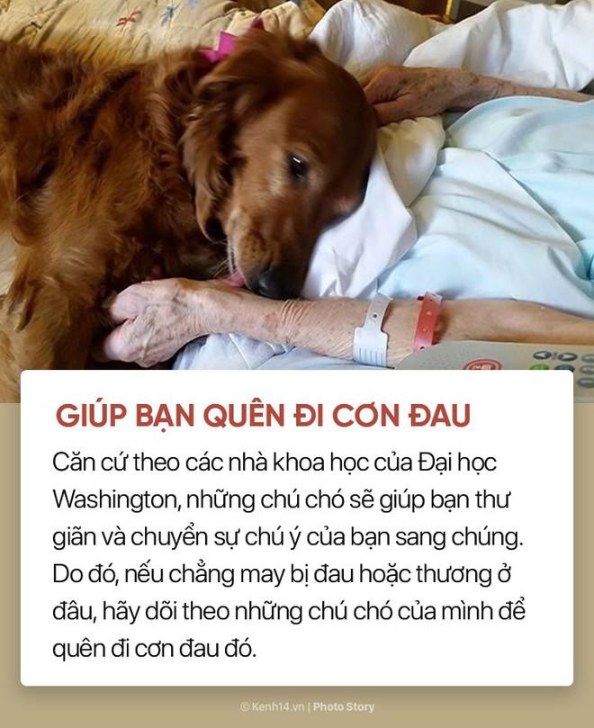 Nuôi cún cưng không chỉ giúp bạn vui vẻ mà còn chống lại rất nhiều bệnh tật - Ảnh 7.