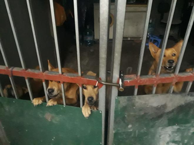 Đàn chó tấn công 2 học sinh tiểu học ở Hà Nội, một bé nhập viện vì bị cắn nhiều phát vào chân - Ảnh 1.