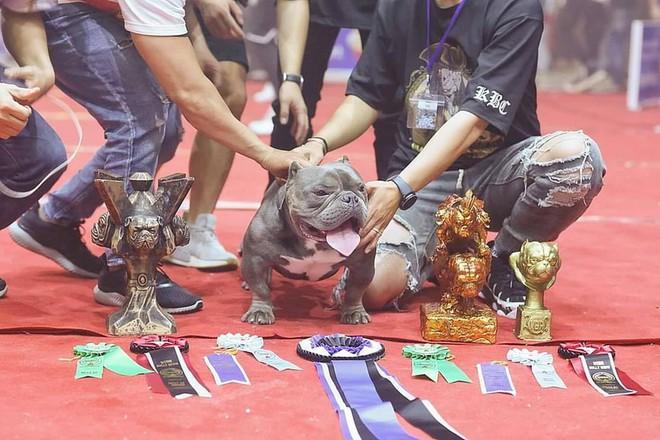Thanh niên Việt rút 2,6 tỷ trong ngân hàng, lặn lội sang nước ngoài để mua bằng được chú chó mình yêu thích - ảnh 6
