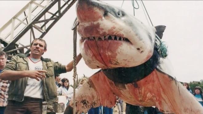 Nước Úc ngập tràn quái vật khổng lồ và nguy hiểm, nhưng con gì giết người nhiều nhất? - ảnh 2