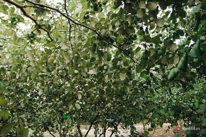 Mùa táo, mùa hoa cải đến rồi, đến Học viện Nông nghiệp ăn tẹt ga, sống ảo cực chất chỉ với 15 nghìn - ảnh 2