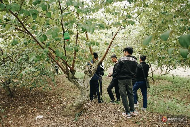 Mùa táo, mùa hoa cải đến rồi, đến Học viện Nông nghiệp ăn tẹt ga, sống ảo cực chất chỉ với 15 nghìn - ảnh 8