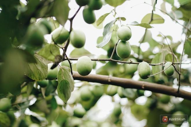 Mùa táo, mùa hoa cải đến rồi, đến Học viện Nông nghiệp ăn tẹt ga, sống ảo cực chất chỉ với 15 nghìn - ảnh 5