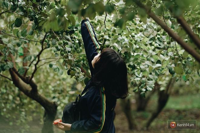 Mùa táo, mùa hoa cải đến rồi, đến Học viện Nông nghiệp ăn tẹt ga, sống ảo cực chất chỉ với 15 nghìn - ảnh 6