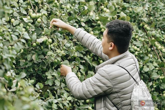 Mùa táo, mùa hoa cải đến rồi, đến Học viện Nông nghiệp ăn tẹt ga, sống ảo cực chất chỉ với 15 nghìn - ảnh 4