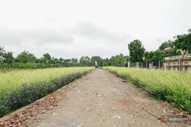 Mùa táo, mùa hoa cải đến rồi, đến Học viện Nông nghiệp ăn tẹt ga, sống ảo cực chất chỉ với 15 nghìn - ảnh 12