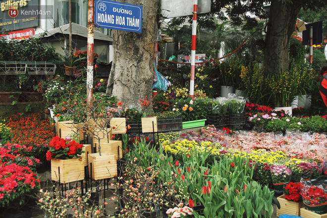 Đào tiến vua đại náo thị trường hoa Tết, giá bán lên tới hàng chục, hàng trăm triệu đồng - ảnh 1