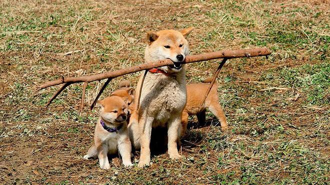 Năm Mậu Tuất và 5 câu chuyện cảm động về loài chó của điện ảnh Nhật Bản - ảnh 1