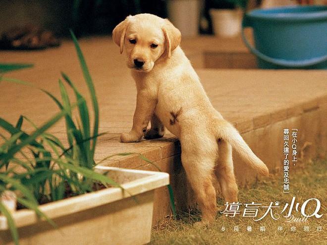 Năm Mậu Tuất và 5 câu chuyện cảm động về loài chó của điện ảnh Nhật Bản - ảnh 3