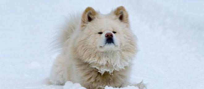 Năm Mậu Tuất và 5 câu chuyện cảm động về loài chó của điện ảnh Nhật Bản - ảnh 9