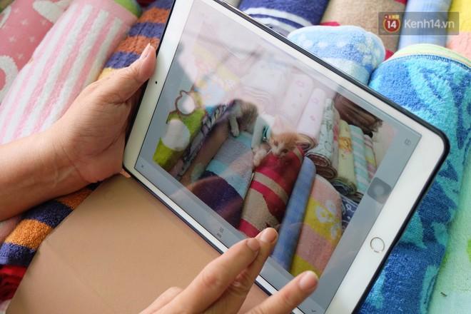 Chuyện cô giúp việc, dì bán vải chung sức cứu giúp hàng nghìn chú mèo suốt 17 năm ở Sài Gòn - Ảnh 8.