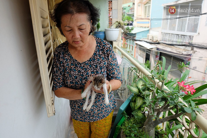 Chuyện cô giúp việc, dì bán vải chung sức cứu giúp hàng nghìn chú mèo suốt 17 năm ở Sài Gòn - Ảnh 3.