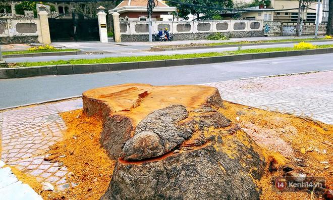Chùm ảnh: Người Sài Gòn đặt hoa hồng trên gốc những hàng cây xanh bị đốn hạ ở đuờng Tôn Đức Thắng - ảnh 13