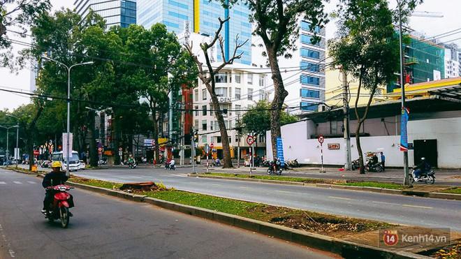 Chùm ảnh: Người Sài Gòn đặt hoa hồng trên gốc những hàng cây xanh bị đốn hạ ở đuờng Tôn Đức Thắng - ảnh 16