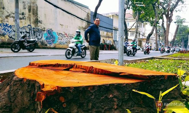 Chùm ảnh: Người Sài Gòn đặt hoa hồng trên gốc những hàng cây xanh bị đốn hạ ở đuờng Tôn Đức Thắng - ảnh 12
