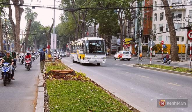 Chùm ảnh: Người Sài Gòn đặt hoa hồng trên gốc những hàng cây xanh bị đốn hạ ở đuờng Tôn Đức Thắng - ảnh 11