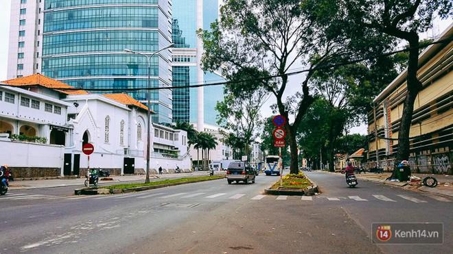 Chùm ảnh: Người Sài Gòn đặt hoa hồng trên gốc những hàng cây xanh bị đốn hạ ở đuờng Tôn Đức Thắng - ảnh 1