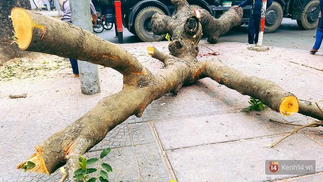 Chùm ảnh: Người Sài Gòn đặt hoa hồng trên gốc những hàng cây xanh bị đốn hạ ở đuờng Tôn Đức Thắng - ảnh 5