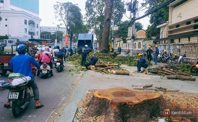 Chùm ảnh: Người Sài Gòn đặt hoa hồng trên gốc những hàng cây xanh bị đốn hạ ở đuờng Tôn Đức Thắng - ảnh 2