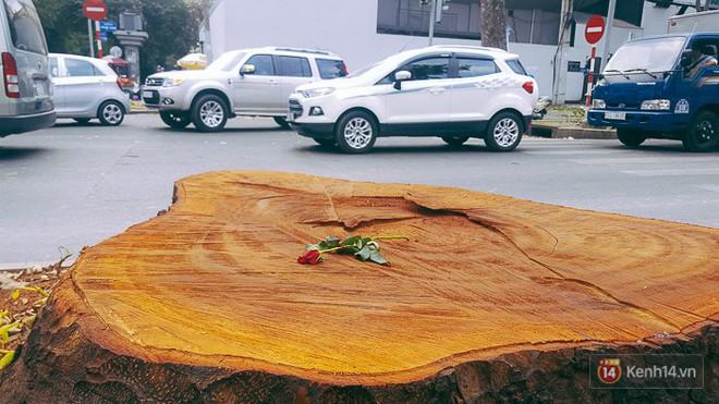 Chùm ảnh: Người Sài Gòn đặt hoa hồng trên gốc những hàng cây xanh bị đốn hạ ở đuờng Tôn Đức Thắng - ảnh 10