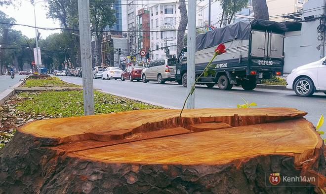 Chùm ảnh: Người Sài Gòn đặt hoa hồng trên gốc những hàng cây xanh bị đốn hạ ở đuờng Tôn Đức Thắng - ảnh 9