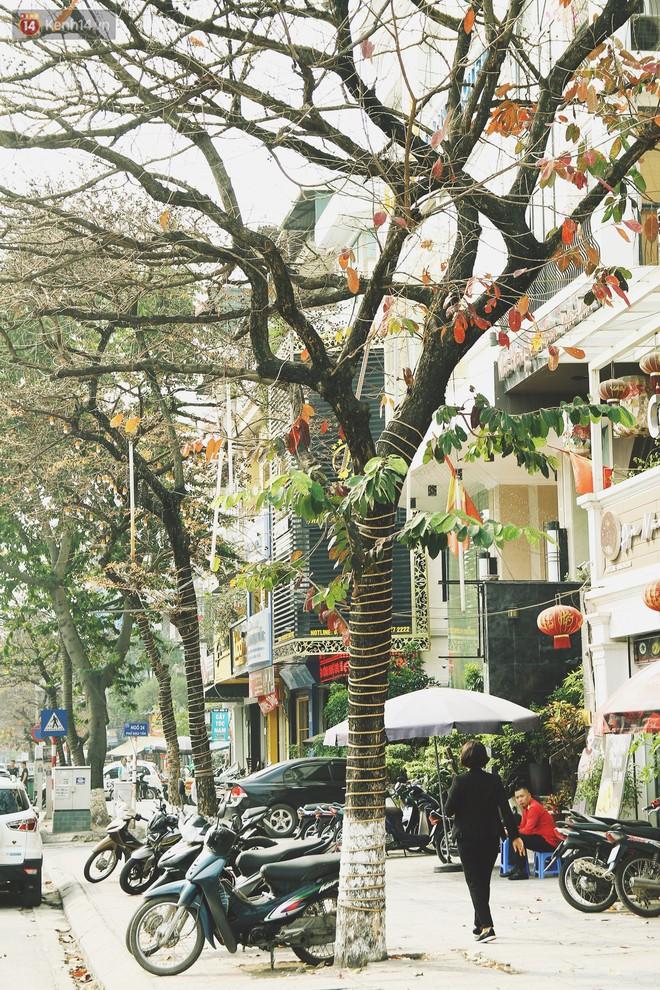 """Trong nhiều năm qua, người Hà Nội đã """"tận dụng"""" những hàng cây xanh như thế nào? - ảnh 3"""