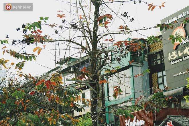Trong nhiều năm qua, người dân Hà Nội đã đối xử với những hàng cây xanh như thế nào? - Ảnh 6.