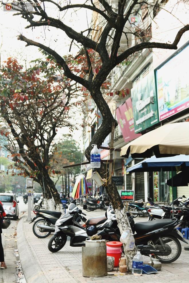 """Trong nhiều năm qua, người Hà Nội đã """"tận dụng"""" những hàng cây xanh như thế nào? - ảnh 7"""