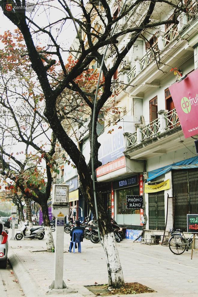 Trong nhiều năm qua, người dân Hà Nội đã đối xử với những hàng cây xanh như thế nào? - Ảnh 5.