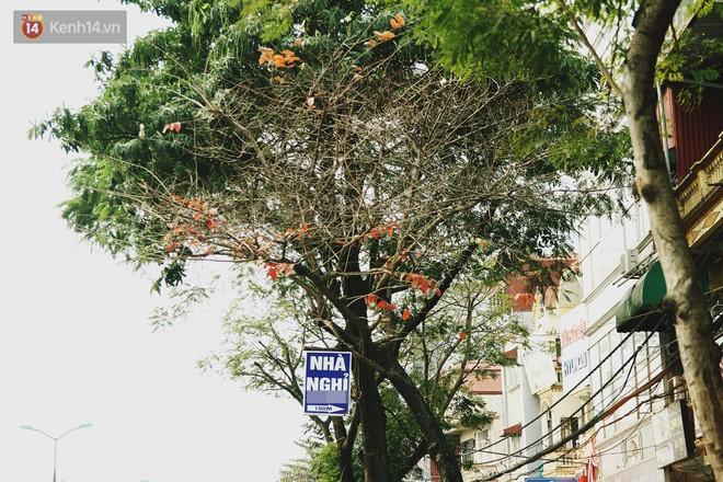 """Trong nhiều năm qua, người Hà Nội đã """"tận dụng"""" những hàng cây xanh như thế nào? - ảnh 8"""