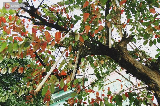 """Trong nhiều năm qua, người Hà Nội đã """"tận dụng"""" những hàng cây xanh như thế nào? - ảnh 4"""