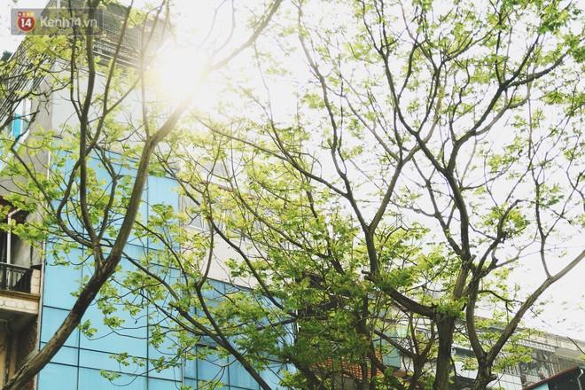 """Trong nhiều năm qua, người Hà Nội đã """"tận dụng"""" những hàng cây xanh như thế nào? - ảnh 2"""