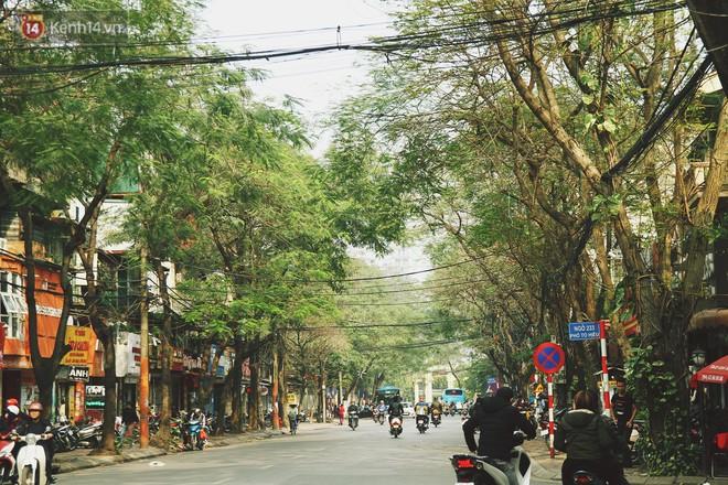 Trong nhiều năm qua, người dân Hà Nội đã đối xử với những hàng cây xanh như thế nào? - Ảnh 1.