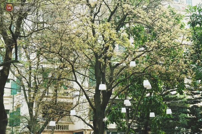 """Trong nhiều năm qua, người Hà Nội đã """"tận dụng"""" những hàng cây xanh như thế nào? - ảnh 9"""