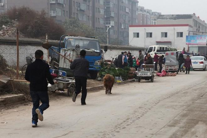 Bi kịch của Ngao Tây Tạng - từ thần khuyển triệu đô thành những con thú bị ruồng bỏ - ảnh 6