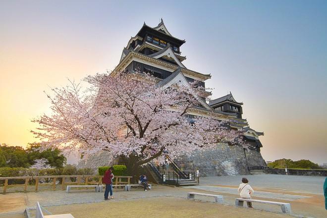 Ghé thăm Kumamoto - một trong Tam đại Quốc bảo thành định hình lịch sử của Nhật Bản - Ảnh 5.