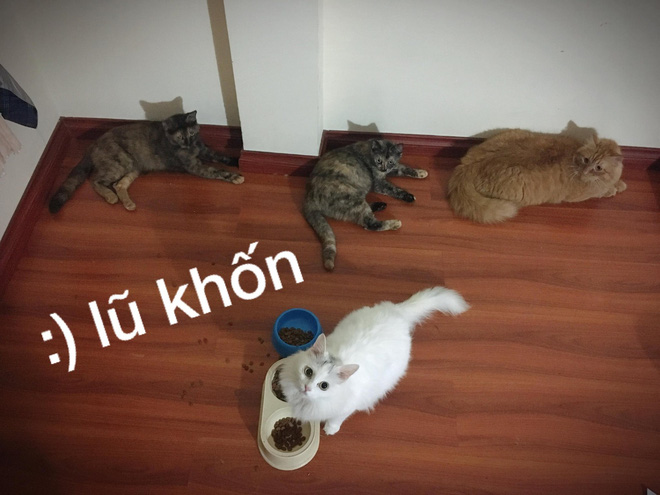 Nỗi lòng cô gái nuôi phải 4 con boss mèo chẳng biết làm gì ngoài ăn và cào nát tất cả đồ vật trong nhà - Ảnh 5.