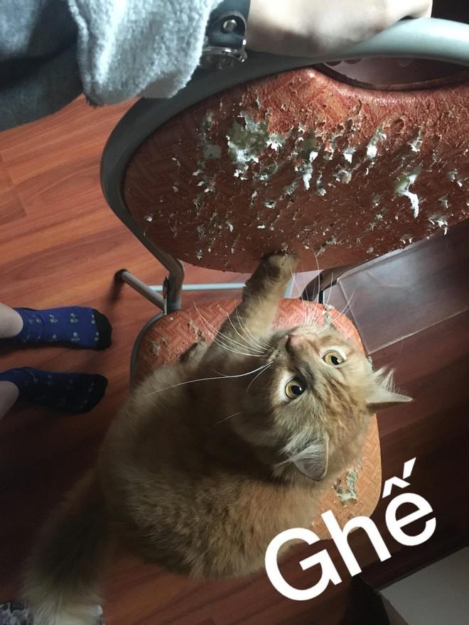 Nỗi lòng cô gái nuôi phải 4 con boss mèo chẳng biết làm gì ngoài ăn và cào nát tất cả đồ vật trong nhà - Ảnh 1.