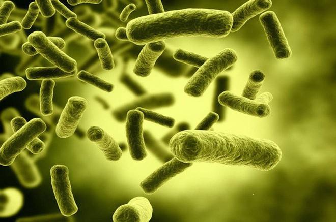 Gà đẻ trứng vàng chỉ có trong cổ tích, còn loại vi khuẩn đẻ ra vàng này là có thật - ảnh 1